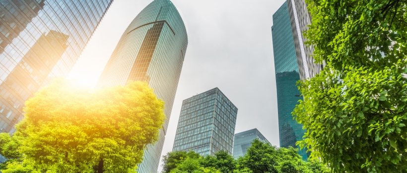 highrise office buildings foregrounded by trees. sunlight filters through credit hallojulie